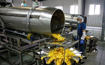 Онега открывает третий завод: 36 млн рублей инвестиций и склад для картошки размером с футбольное поле
